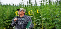 Company Eyes Dove Creek for Hemp Plant