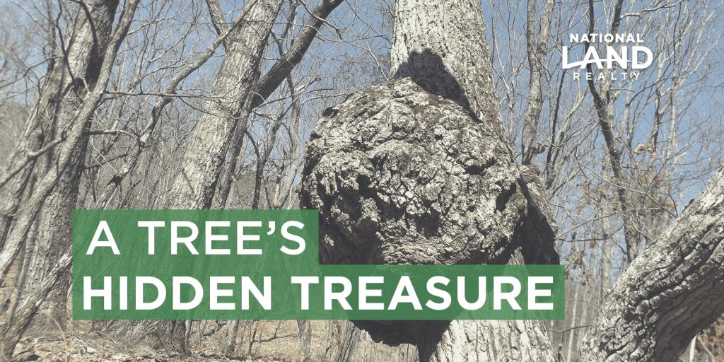 A Tree's Hidden Treasure