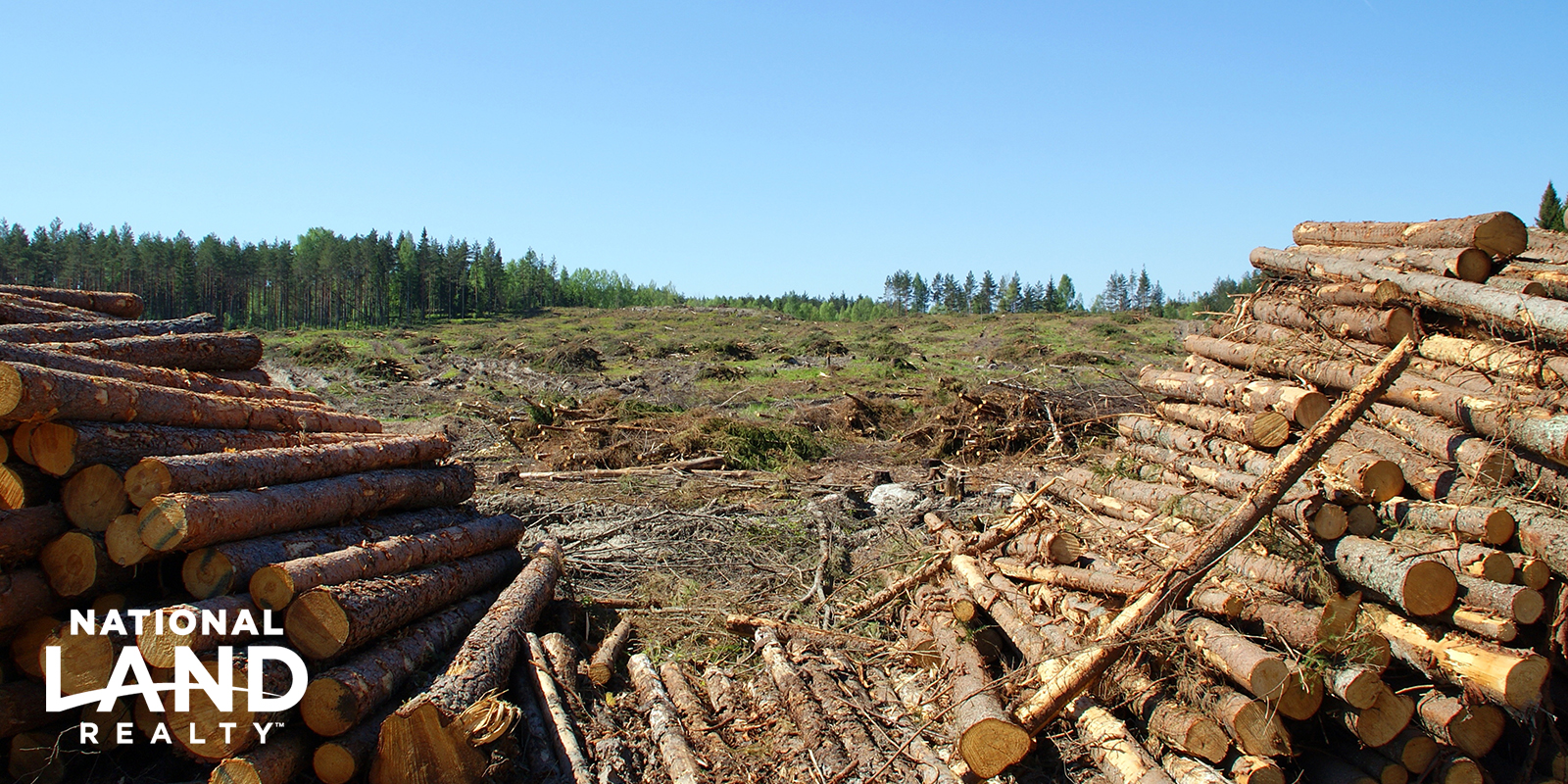 Get the Most Out of Your Timber Tract Before Selling - National Land