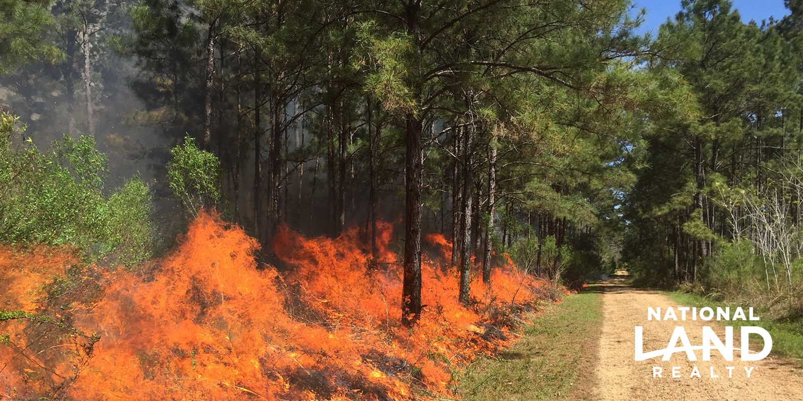 A controlled fire or prescribed burning