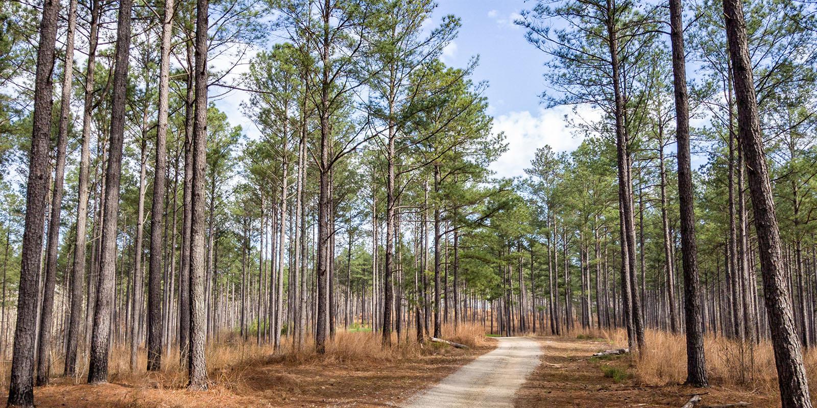 Timberland Investing