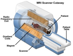 MRI: A Guided Tour  MagLab