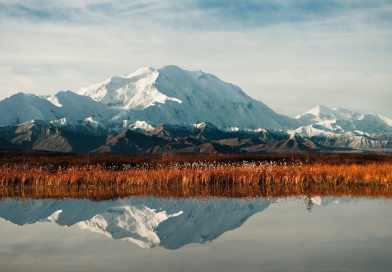 8 Books to Read Before Visiting Denali National Park and Preserve