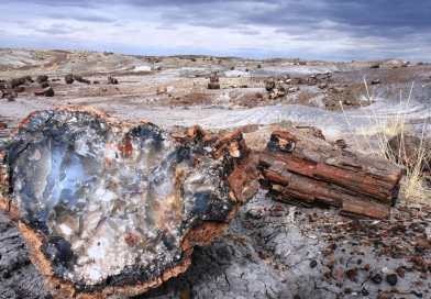 One Day in Petrified Forest National Park