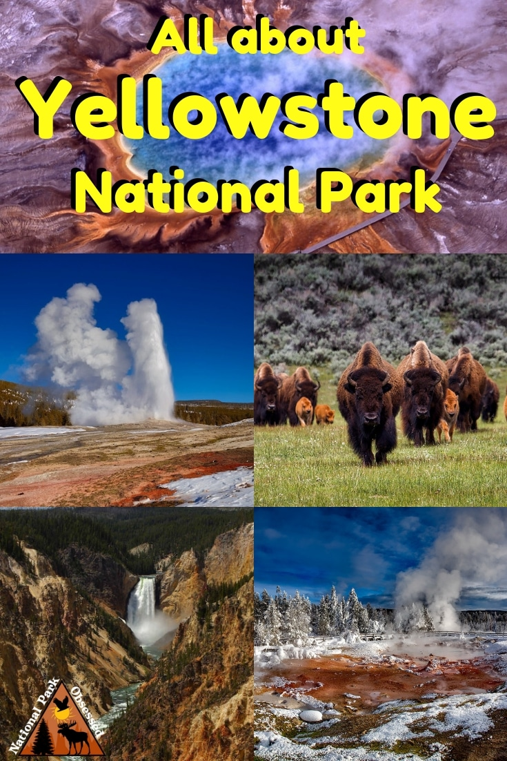 Planning to visit Yellowstone National Park, Wyoming, USA? Don\'t know where to start. Let National Park Obsessed help you plan your trip to #Yellowstone with guides, itineraries, things to know and much much more.  #Nationalparkobsessed #nationalpark #findyourpark #nationalparkgeek #wyoming #idaho #montanta #yellowstone #yellowstonenationalpark #yellowstonenps