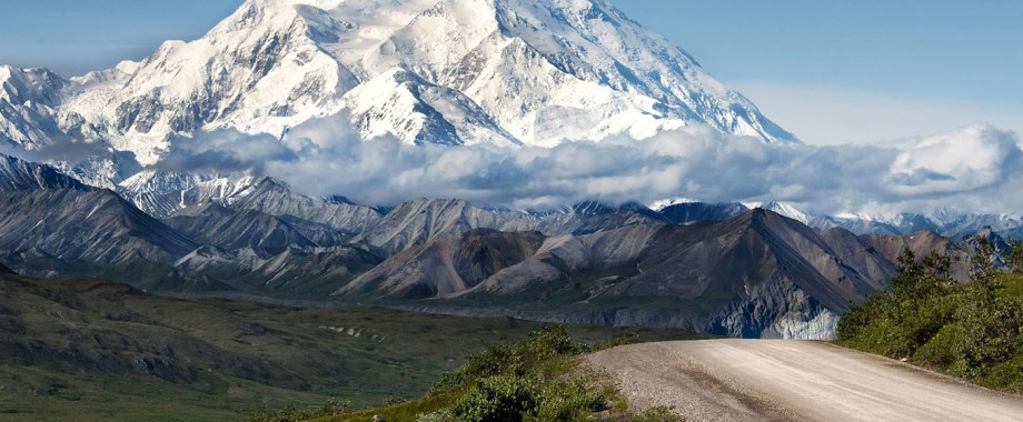dog info and rules denali national park