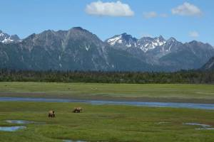 dog info and rules lake clark national park