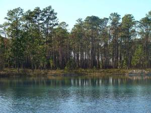 Dog info and rules Apalachiocola National Forest