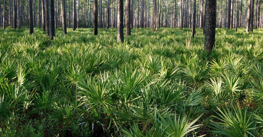 Dog info and rules Osceola National Forest