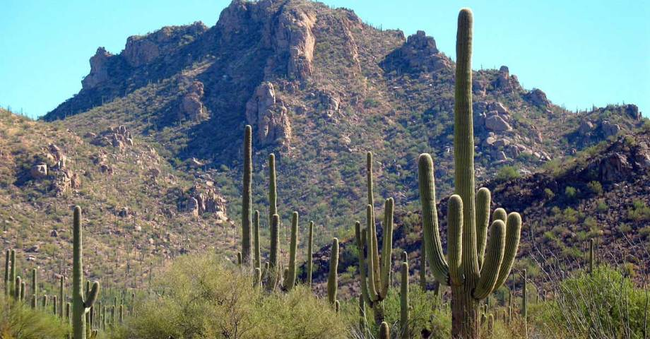 dog info and rules saguaro national park