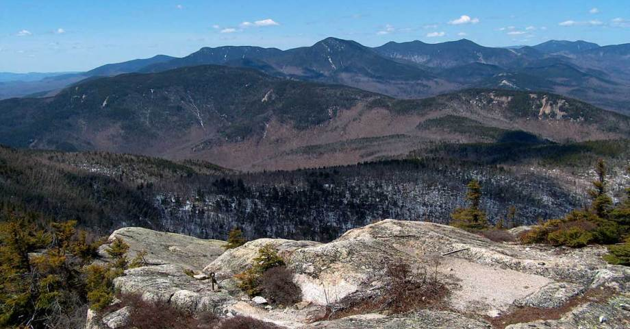 white mountain national forest dog pet info