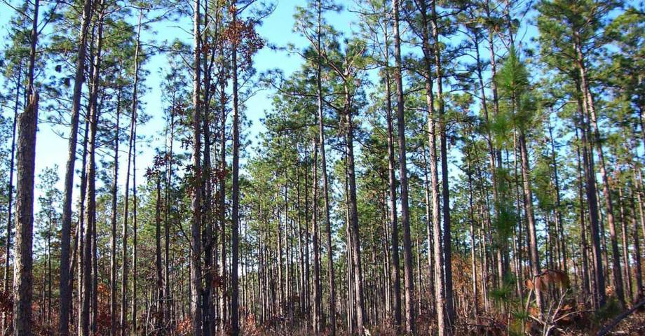 Bienville national forest dog pet info