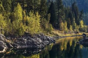 lewis clark national forest pet dog info