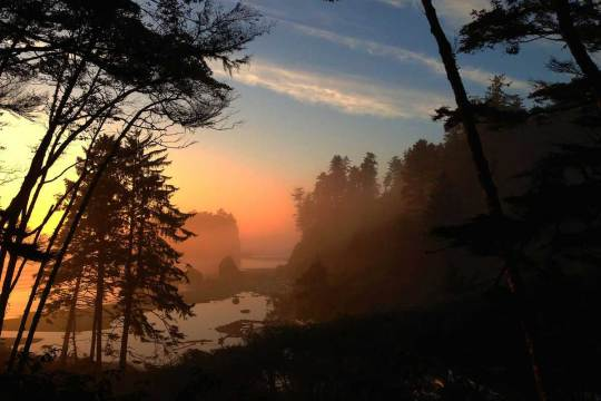 olympic national forest pet info