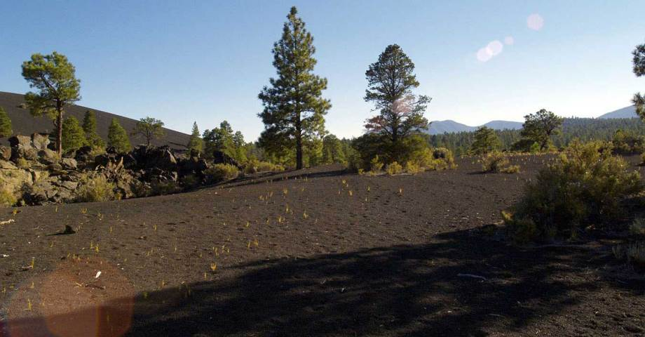 dog info and rules sunset crater volcano national monuments