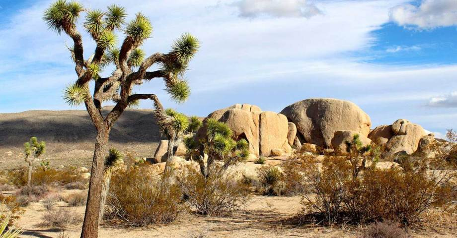 dog info and rules mojave national preserve