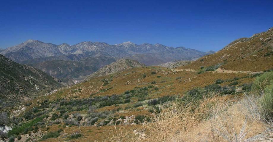 Dog info and rules San Bernardino National Forest