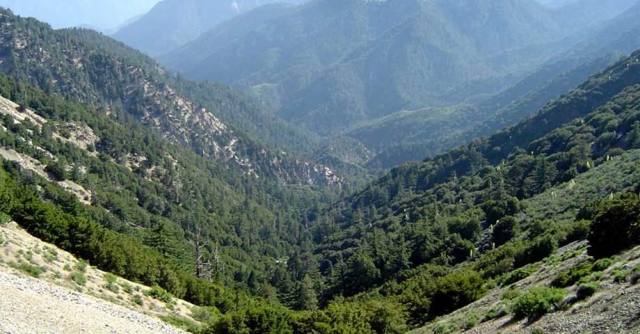 california mountain dog info
