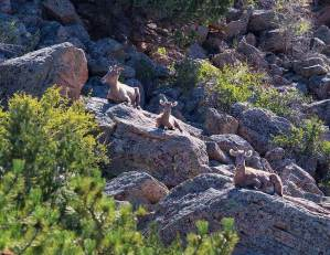 browns canyon dog info