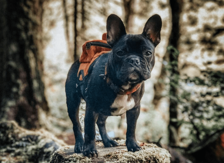 hiking, camping and exercise tips for your dog
