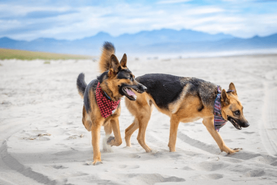 10 Tips for Hiking and Camping with Dogs