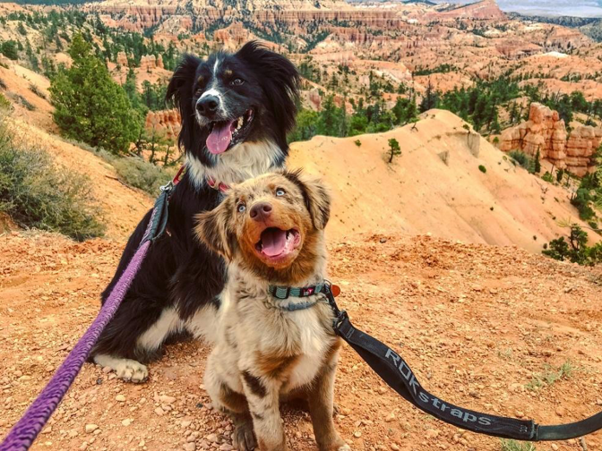 Sun's out tongues out! Aspen and Sadie in Bryce Canyon NP in Utah. Photo courtesy @twodogsonetale.