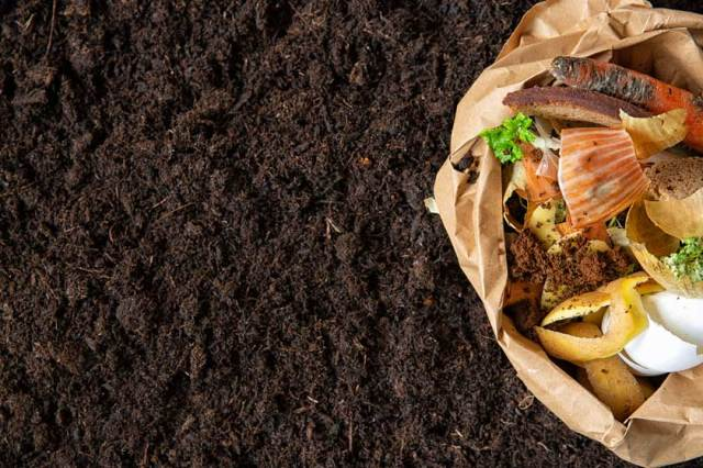 how to compost dog waste