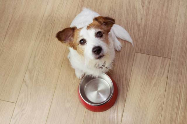 00 dog food what to feed your dog