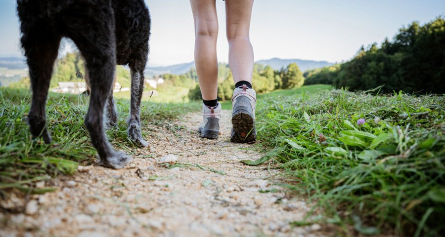 dog waste and the environment how to leave no trace hiking with dogs