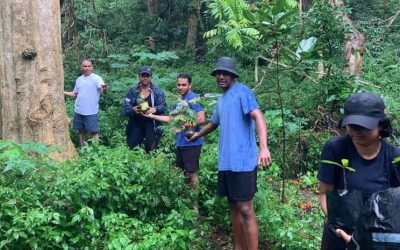 WWF Fiji Volunteers Help Out at Sigatoka Sand Dunes National Park