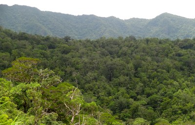 Waisali Rainforest Reserve_Pristine Forest