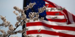 American flag waving in the wind, cherry blossoms can be seen in the foreground