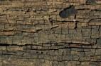 Cracked_Wood_1_by_objekt_stock