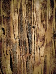 wood_texture_by_izzie_hill-d62304j