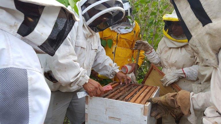 extraccion-muestras-apicolas