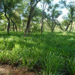 Vivir, producir y conservar el bosque es posible