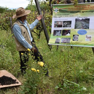 Visita a productor de vid orgánica en Colón Norte