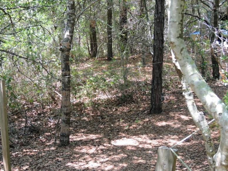 Trail14015