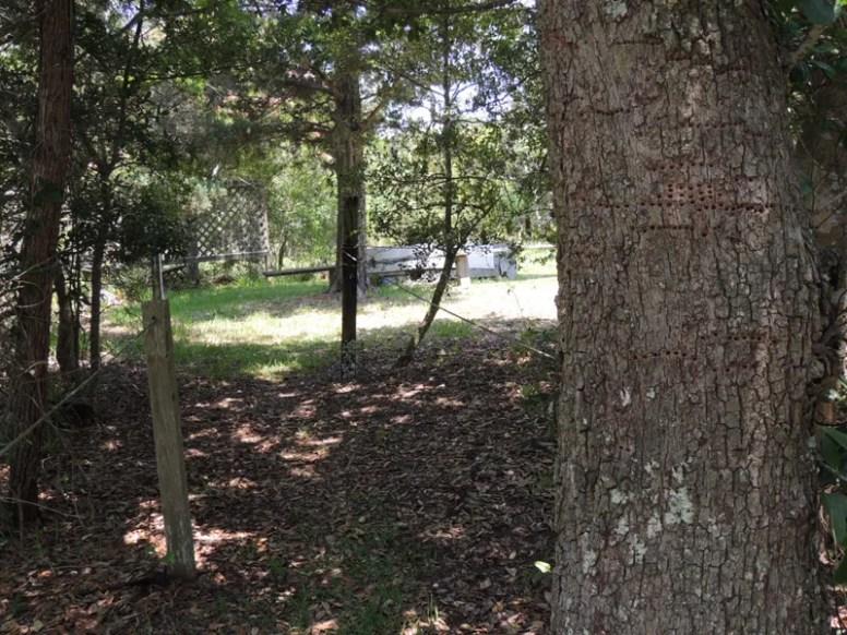 Trail14029