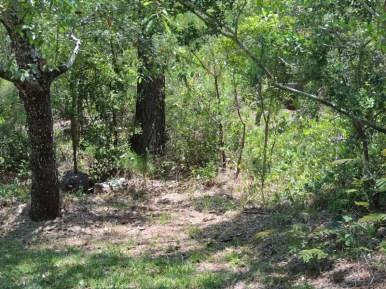 Trail14032
