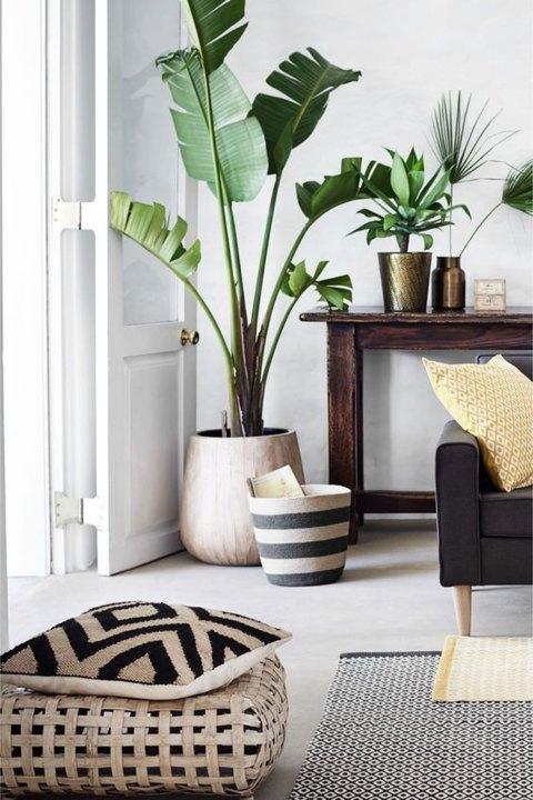 house-plants-decor