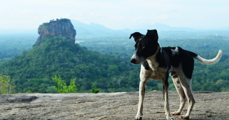 Pidurangala Rock: An Early Morning Hike in Sigiriya