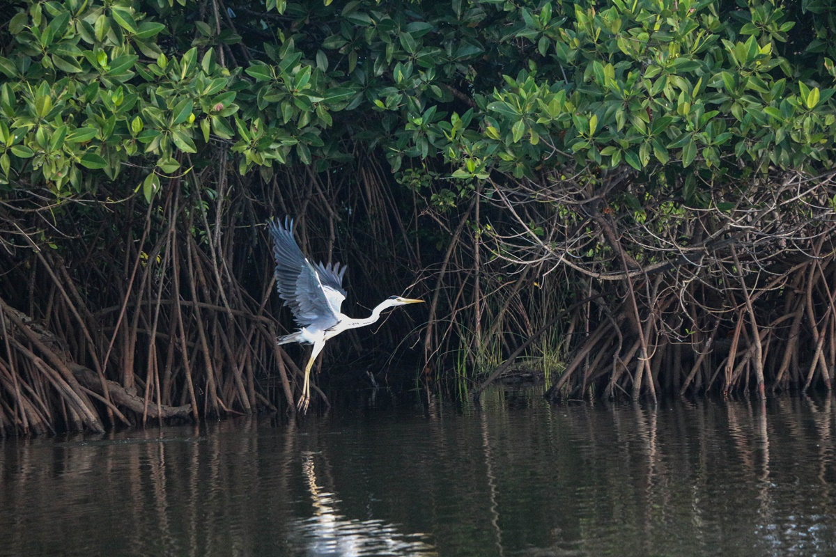 Pottuvil Lagoon Tour at the Kottukal Lagoon, about 5km north of Arugam Bay