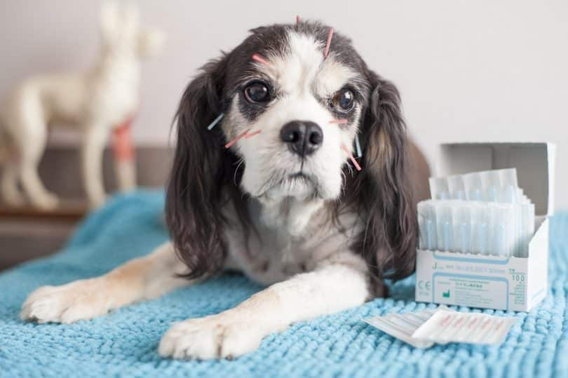 Alternative Medical Practices for Canines