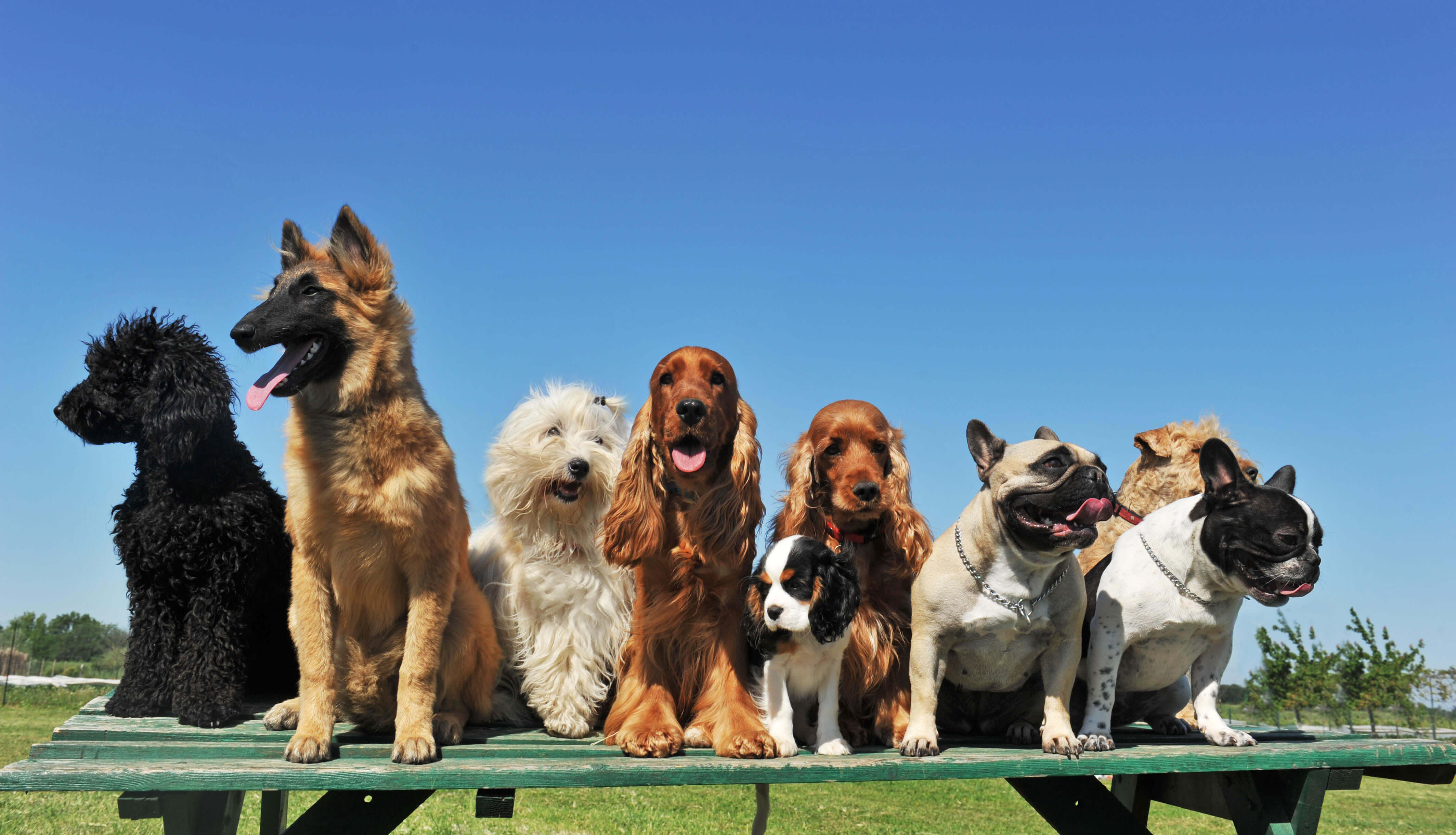 10 Trending Dog Breeds of 2019