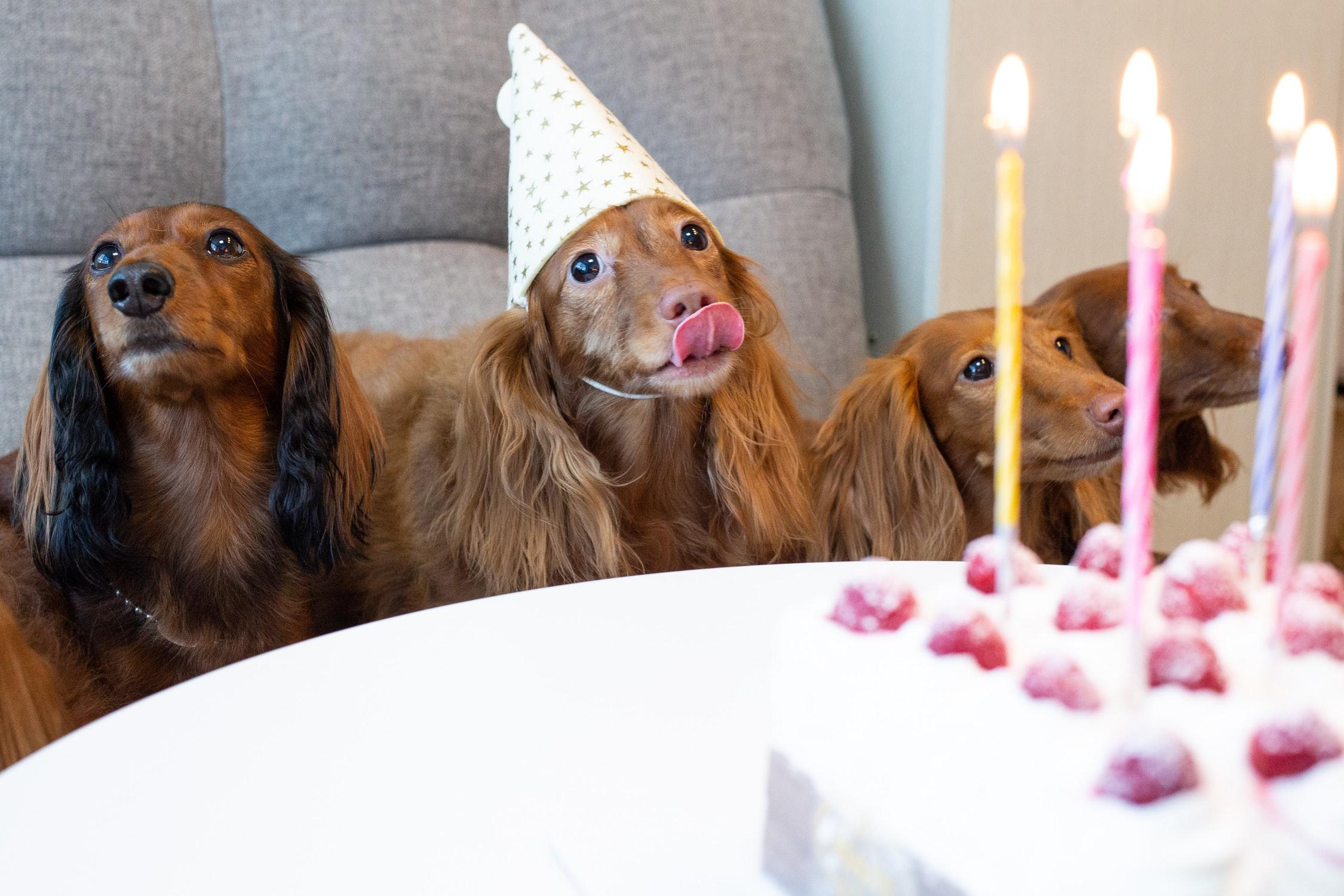 NatrixOne Birthday Dogs