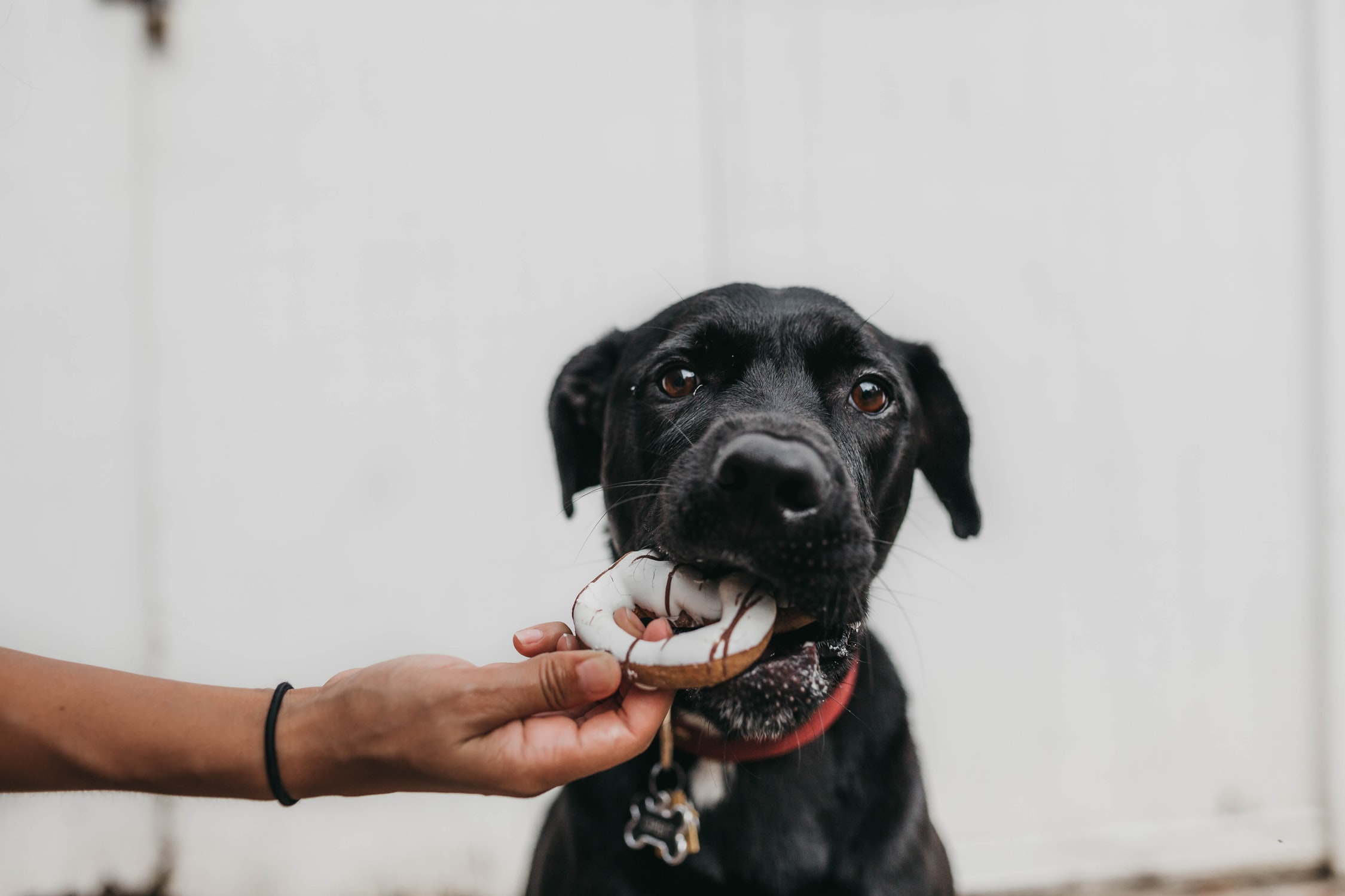 10 Things Never To Feed Your Dog and Why