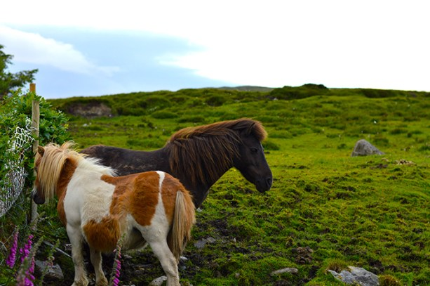 Tiny Irish horses // Nattie on the Road