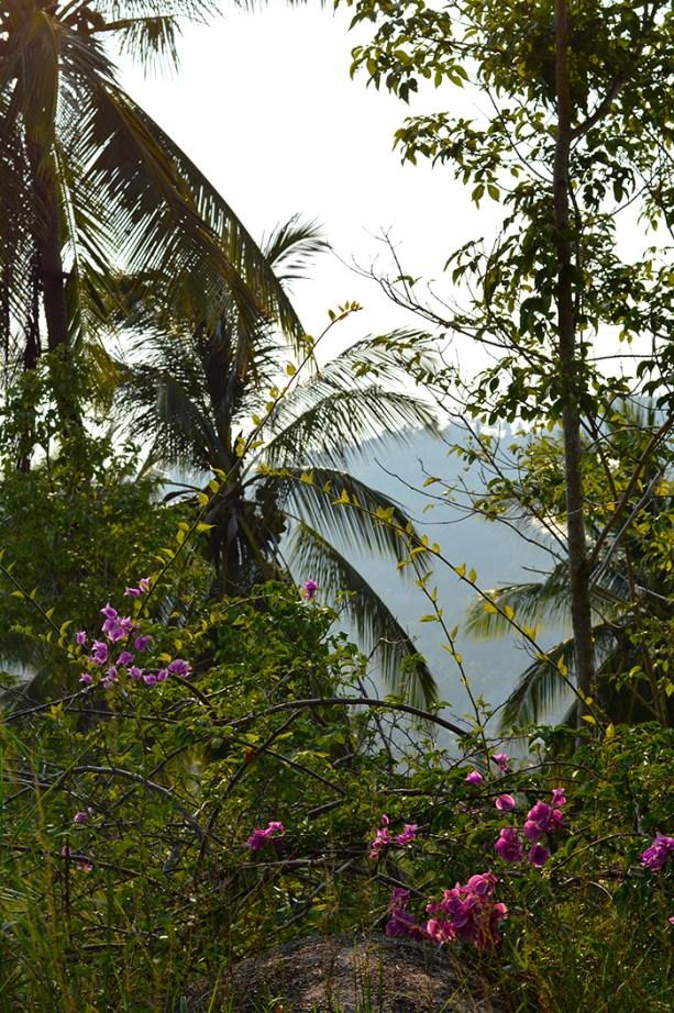 tropical jungles on Koh Tao