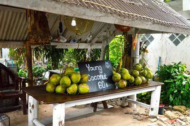 coconuts - Koh Tao Thailand